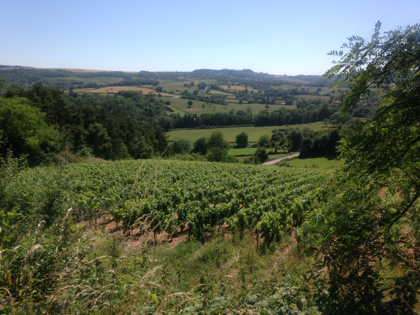 wine country france