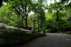 yellow taxi central park